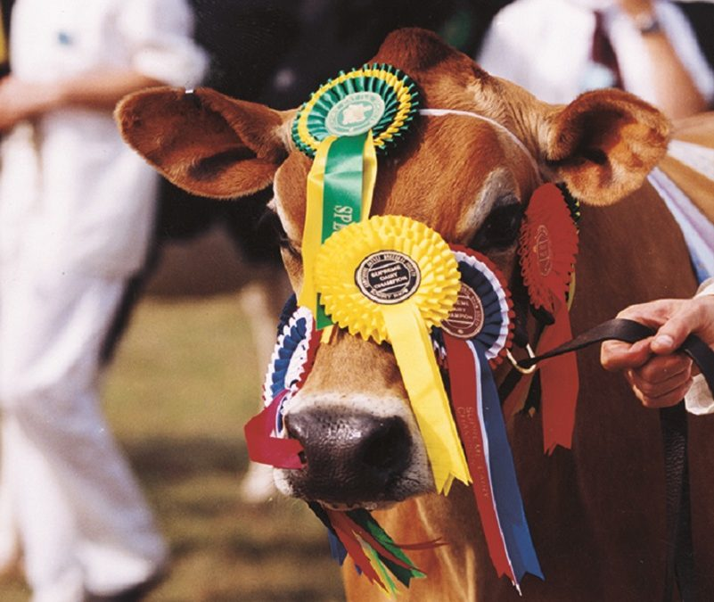 Sussex Gourmand at the Romsey Show Sat 14/09/19